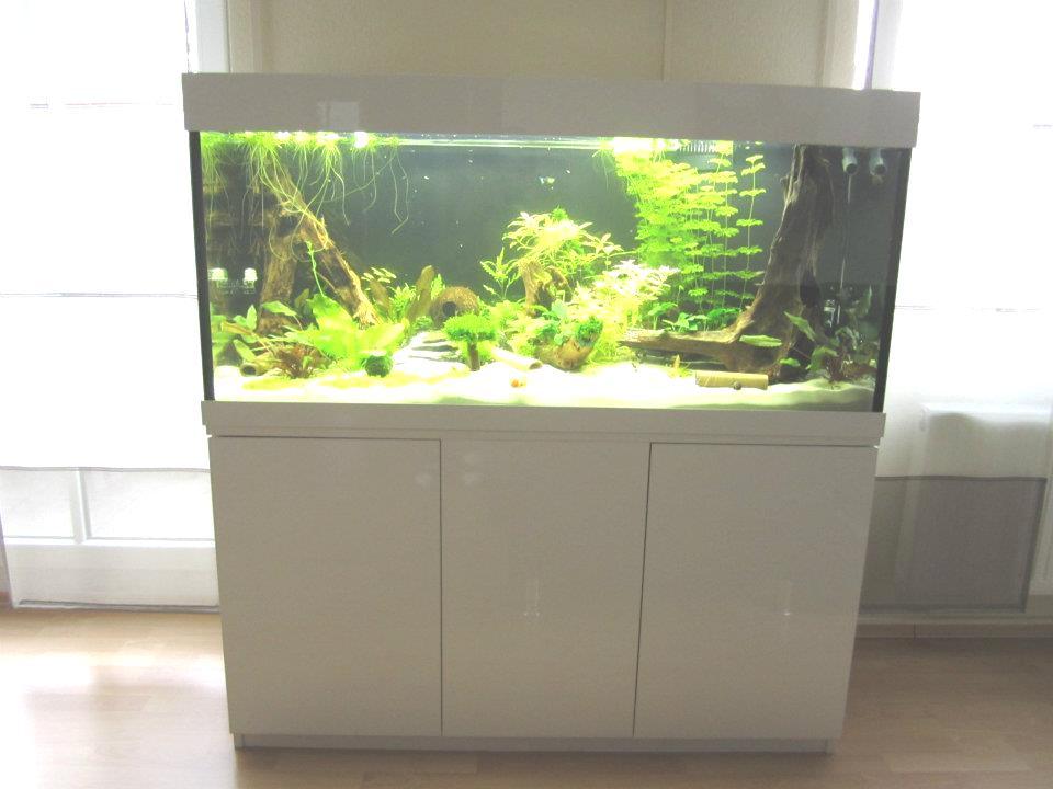 aquarium ruckwand selber bauen innenraum und m bel. Black Bedroom Furniture Sets. Home Design Ideas